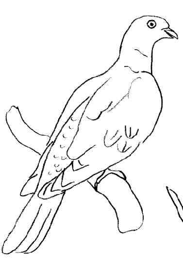 Coloriages oiseaux - Dessin pigeon ...