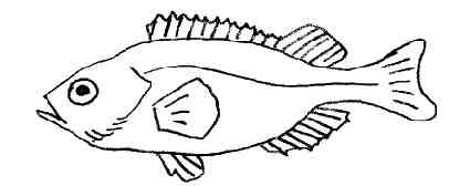 Coloriages poissons - Dessin poisson simple ...