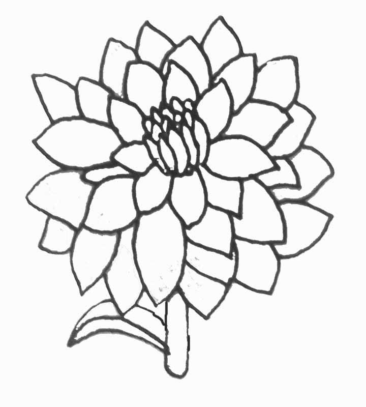 Coloriage dahlia - Coloriage fleur bleuet ...