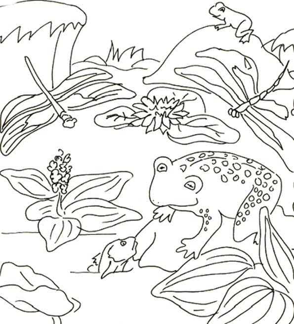 Coloriage grenouille et libellules - Photo de libellule a imprimer ...