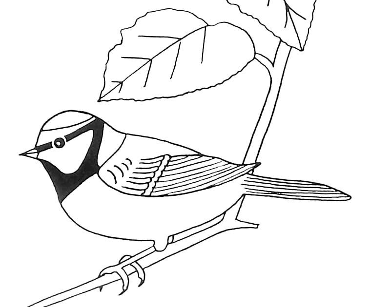 Coloriage Oiseau Sur Arbre.Coloriage Oiseau Mesange Bleue