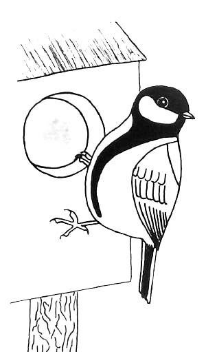Coloriages naturalistes - Coloriage de oiseau ...