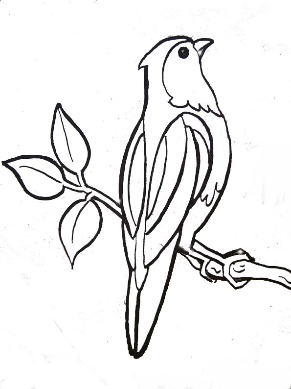 Coloriage oiseau perch - Dessins oiseau ...