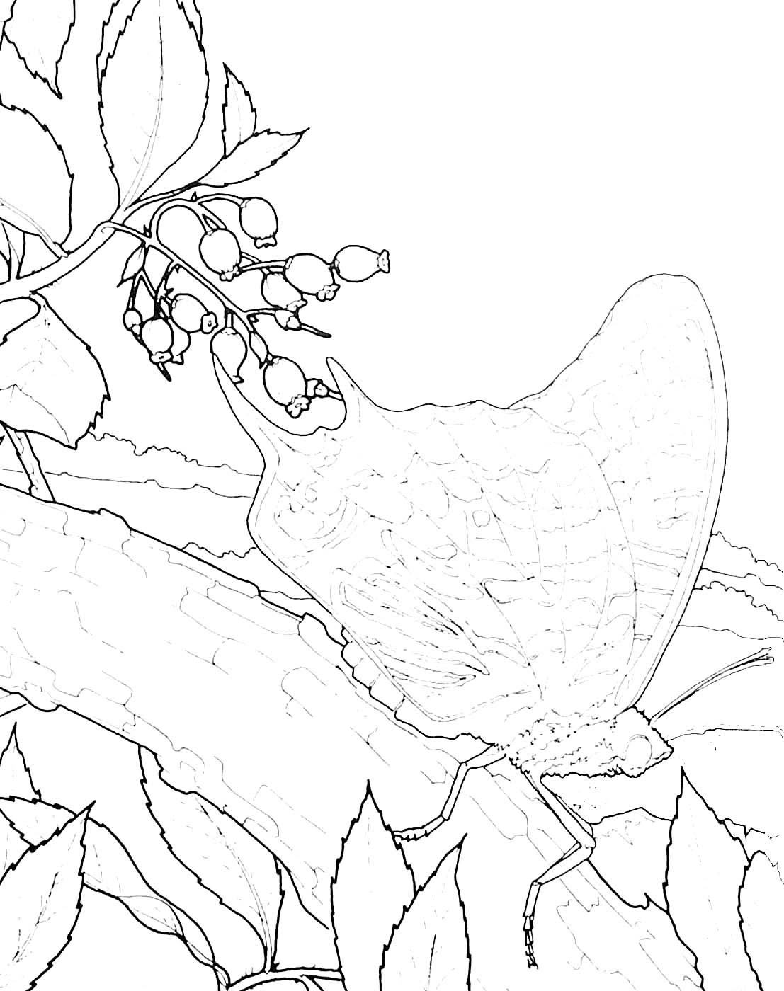 Coloriages campagne - Coloriage campagne ...
