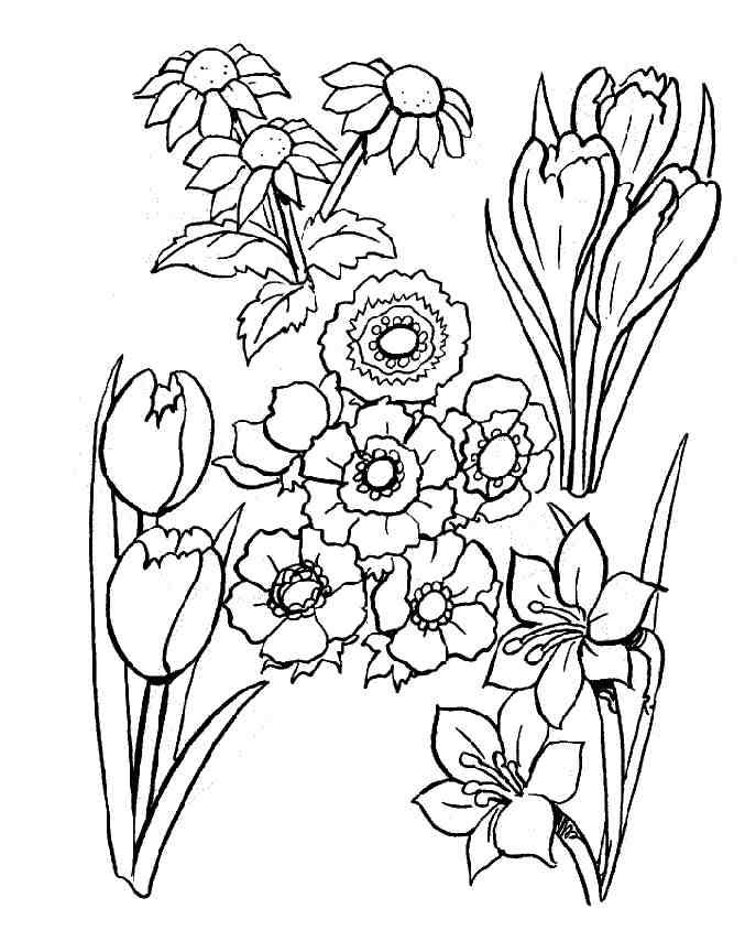 Coloriage fleurs cultiv es - Coloriage a imprimer fleurs exotiques ...