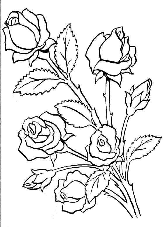 Coloriages fleurs - Coloriage de rose ...