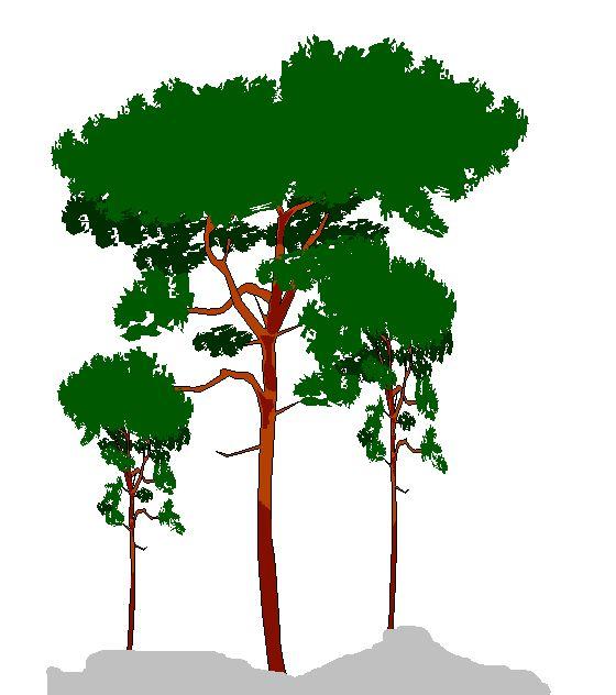 Dessin d 39 arbres - Arbres dessins ...