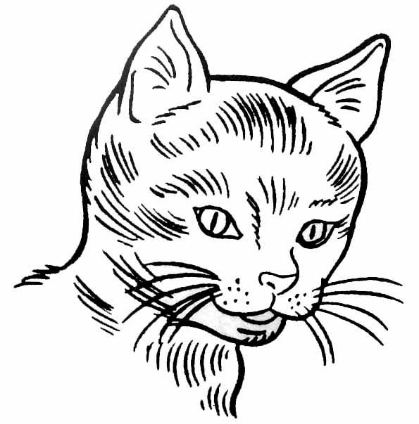 Souvent Coloriage tete de chat LB58