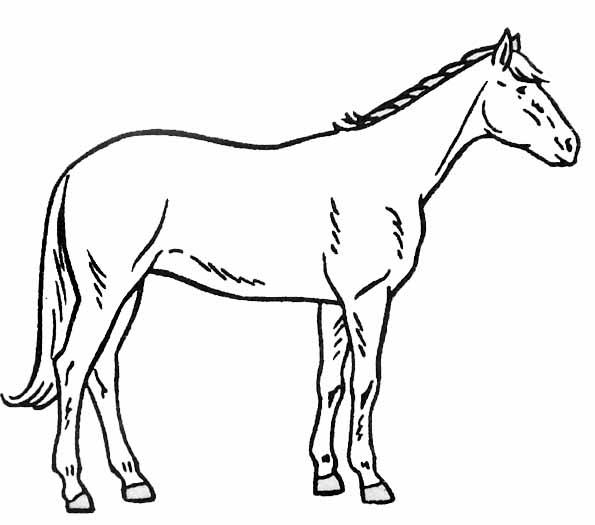 Coloriage cheval - Dessin cheval de trait ...