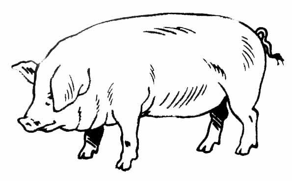 Coloriage cochon ou porc - Image de cochon a imprimer ...
