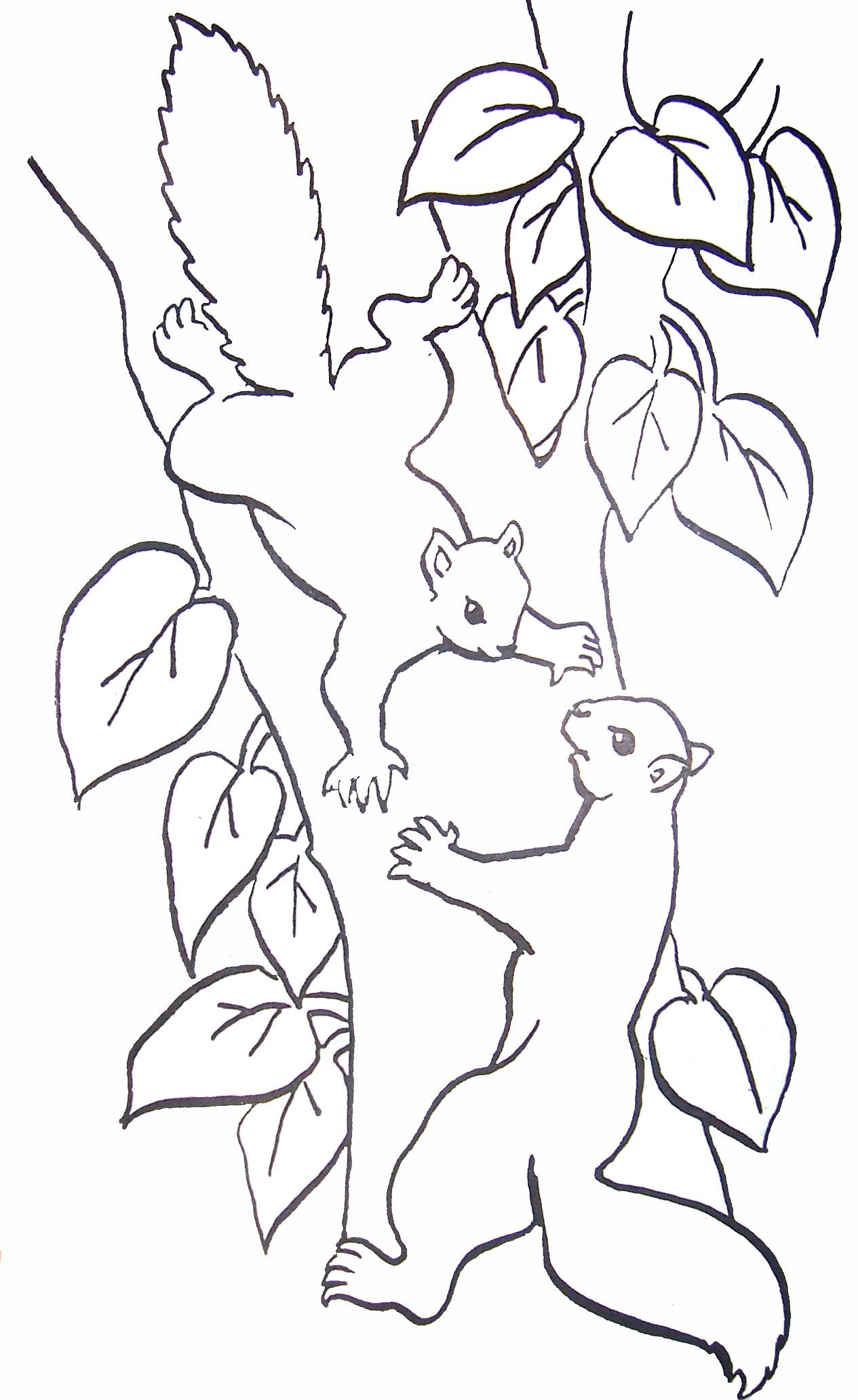 Coloriage ecureuils - Coloriage d ecureuil ...