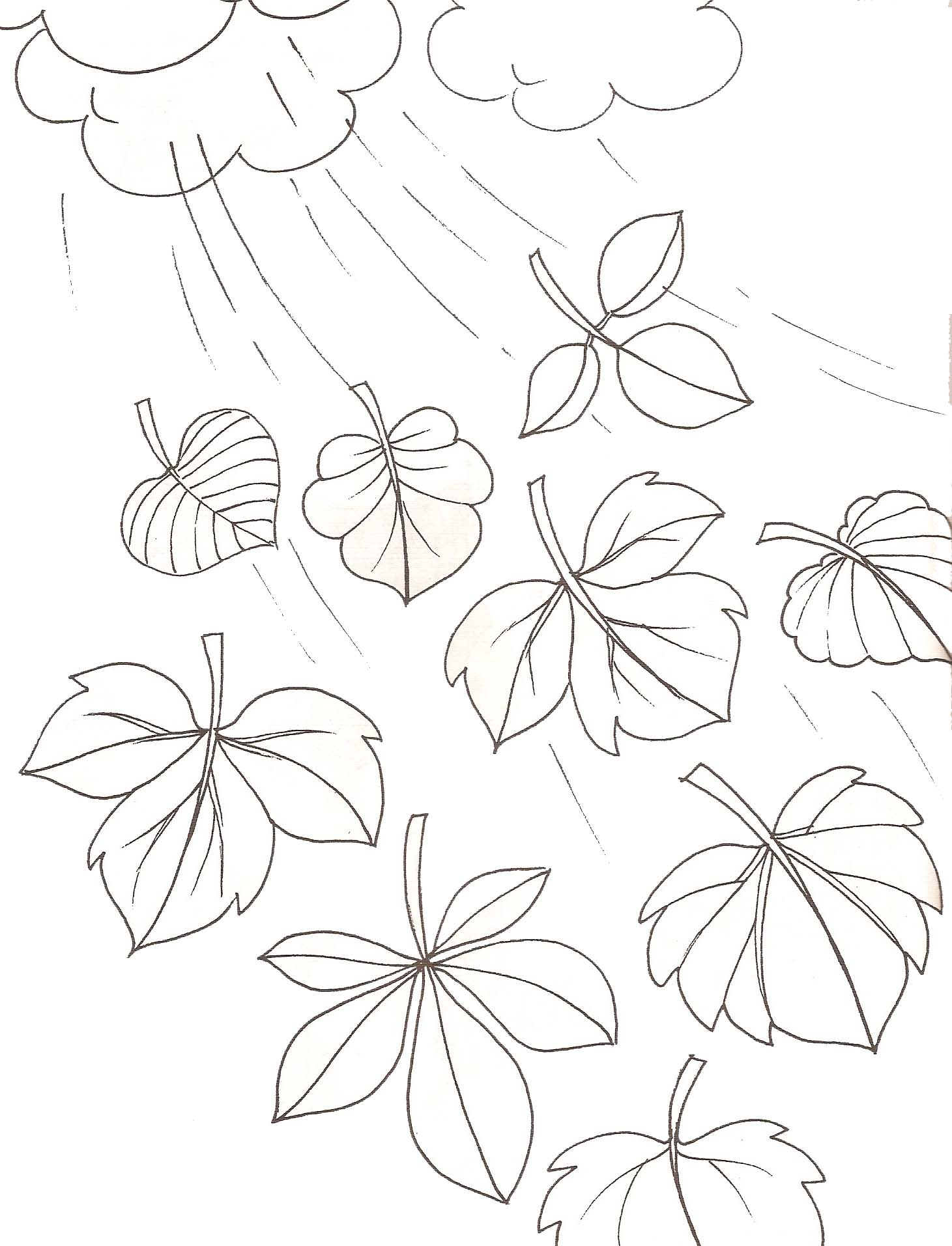 Coloriage feuilles d automne