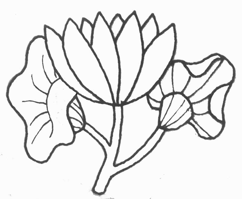 coloriage fleur de lotus. Black Bedroom Furniture Sets. Home Design Ideas