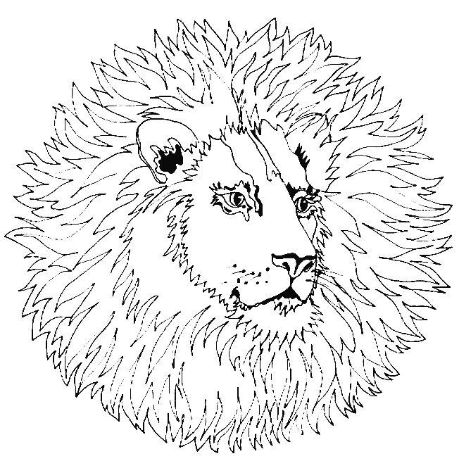 Coloriage mandala lion