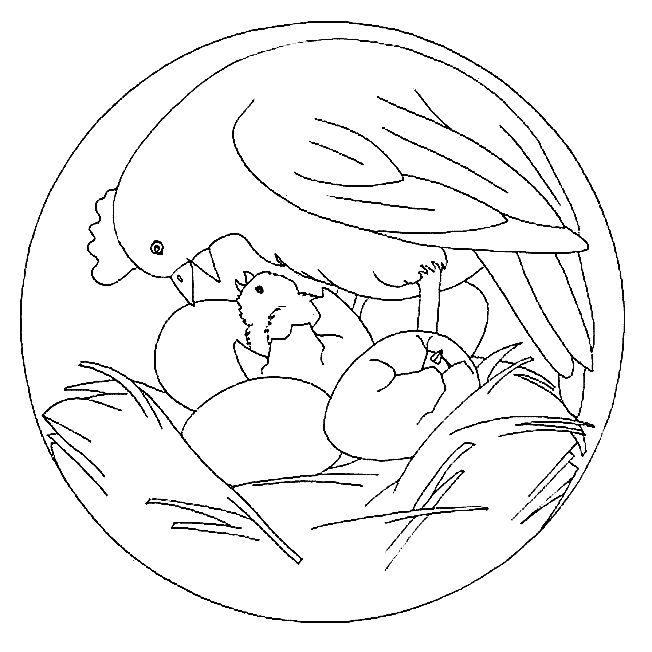 Coloriage mandala poule