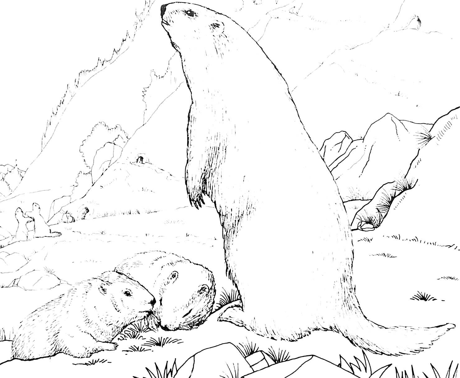 Coloriage marmotte et ses petits - Dessiner une marmotte ...