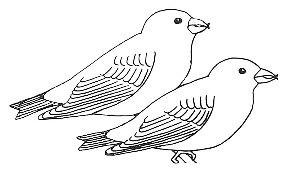 Coloriage oiseaux becs crois s des sapins - Image oiseau dessin ...