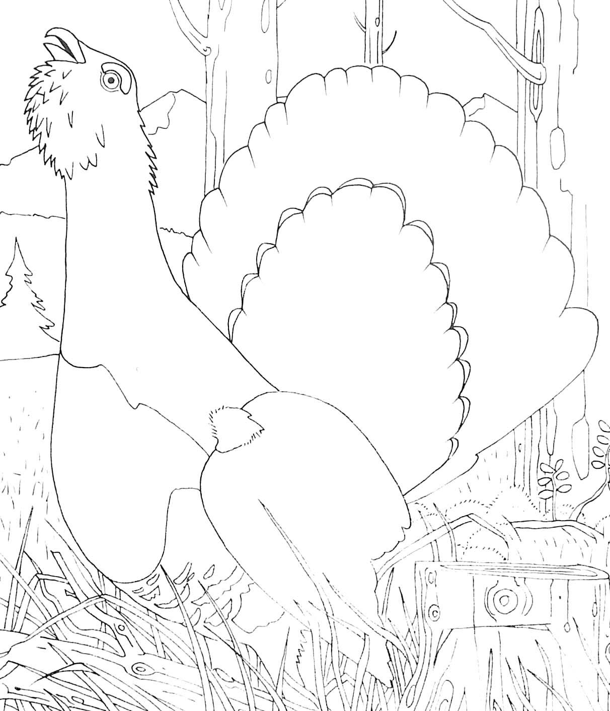 Coloriage D Oiseau Grand Tetras