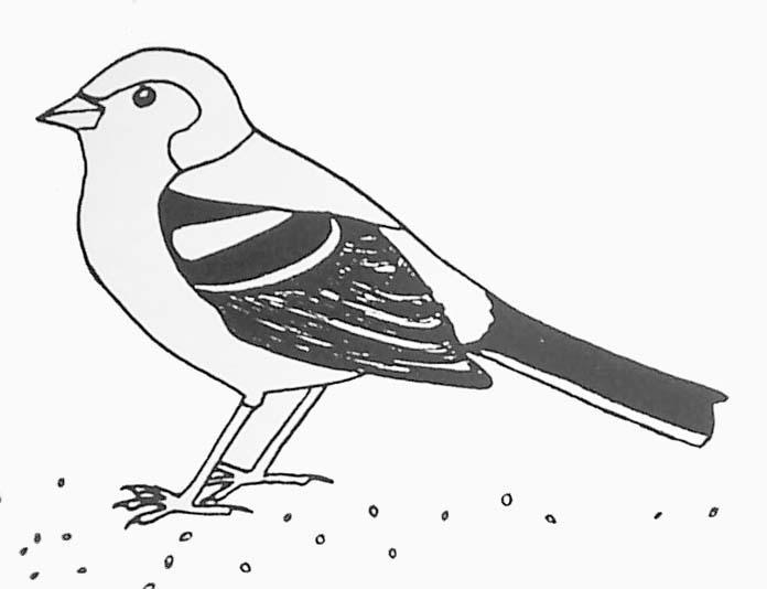 Coloriage Oiseau Sur Arbre.Coloriage Pinson Des Arbres