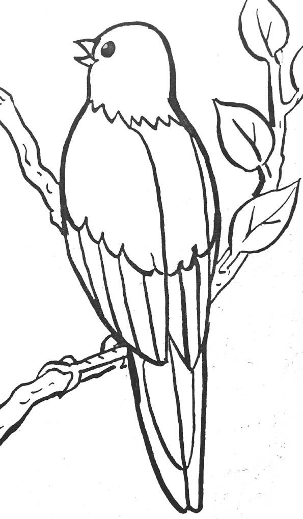 Coloriage Fleur Coucou.Coloriages Oiseaux