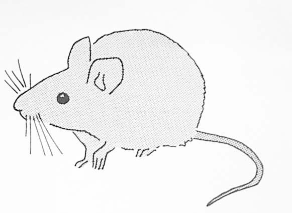 Coloriage souris - Dessin de petite souris ...