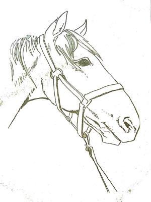 Coloriages chevaux - Coloriage des chevaux ...