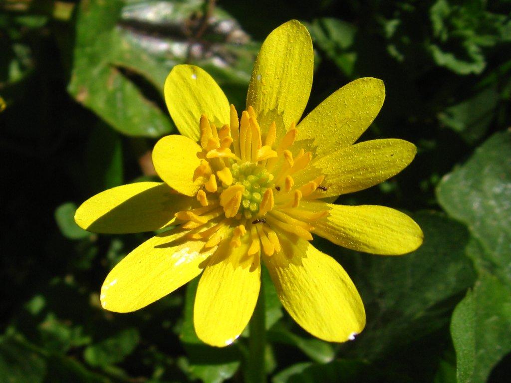 Bougainville Fleur destiné fleurs