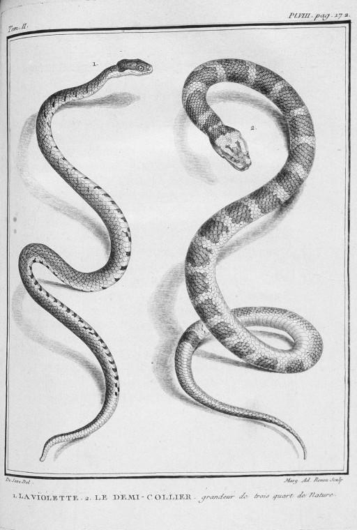 Dessins Gravures Serpents