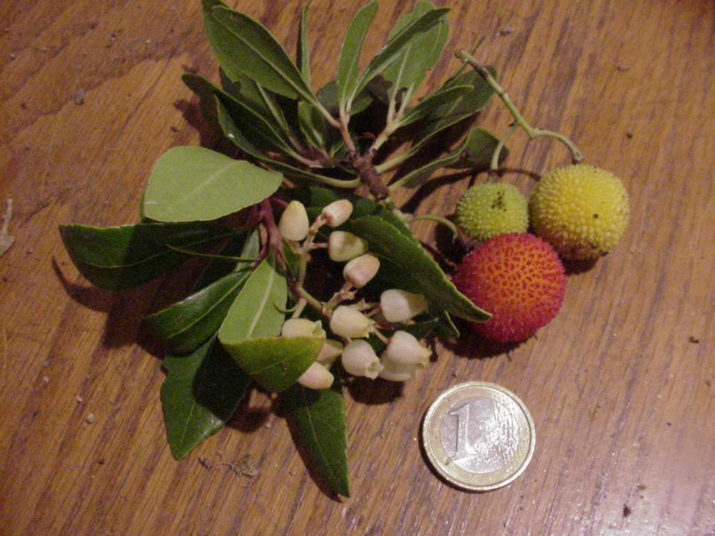 Arbouses arbouse - Fruit de l arbousier ...