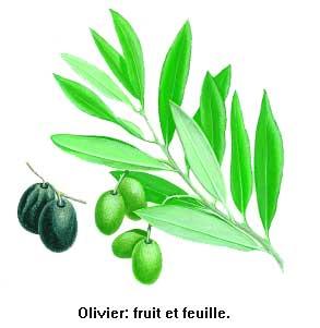 Coloriage Arbre Dolive.Oliviers Olivier Olive Olives Arbre Fruitier