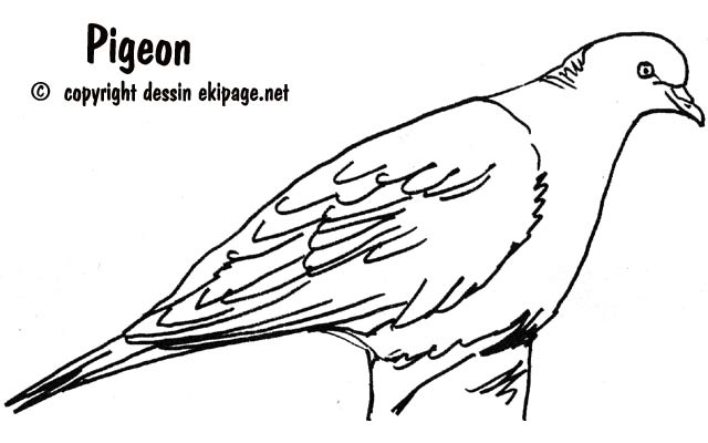 Coloriage pigeon a imprimer - Coloriage pigeon ...