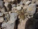 Photos_arachnides_araignees_-_2000-06-18_-_899S-araignee.JPG