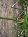 Photos_arachnides_araignees_-_2005-06-12_-_2652_araignee.jpg