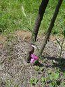 Photos_fleurs_sauvages_01_-_2001-05-26_-_897f_Glaieul_d_Ilyrie.jpg