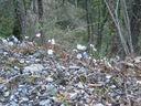 Photos_fleurs_sauvages_11_-_2011-03-20_-_058_anemones_hepatiques_dans_un_pierrier.JPG