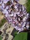 Photos_fourmis_-_2005-05-08_-_0204_fourmi.jpg