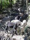 Photos_animaux_de_ferme_-_troupeau_anes_dans_le_bois.jpg