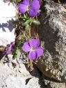Photos_environnement_-_aubriete.jpg