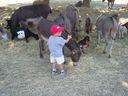 Photo_fond_ecran_-_les_enfants_et_les_animaux_de_la_ferme.jpg
