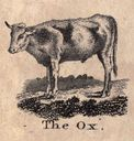 gravures_anciennes_animaux_-_boeuf_-_ox.jpg