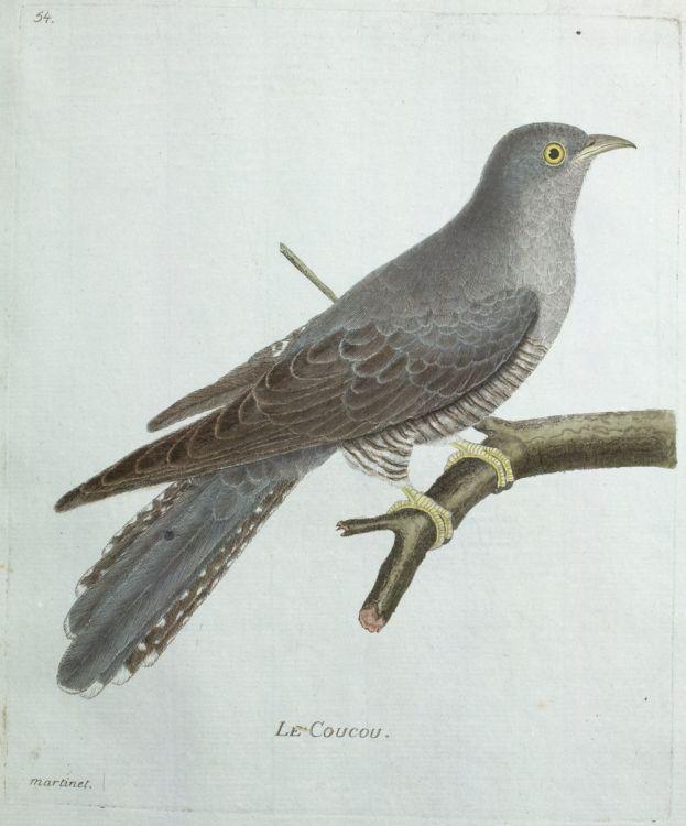 Coucou de printemps  en écho à William Wordsworth  Exlibris ~ Le Coucou Des Bois Oiseau