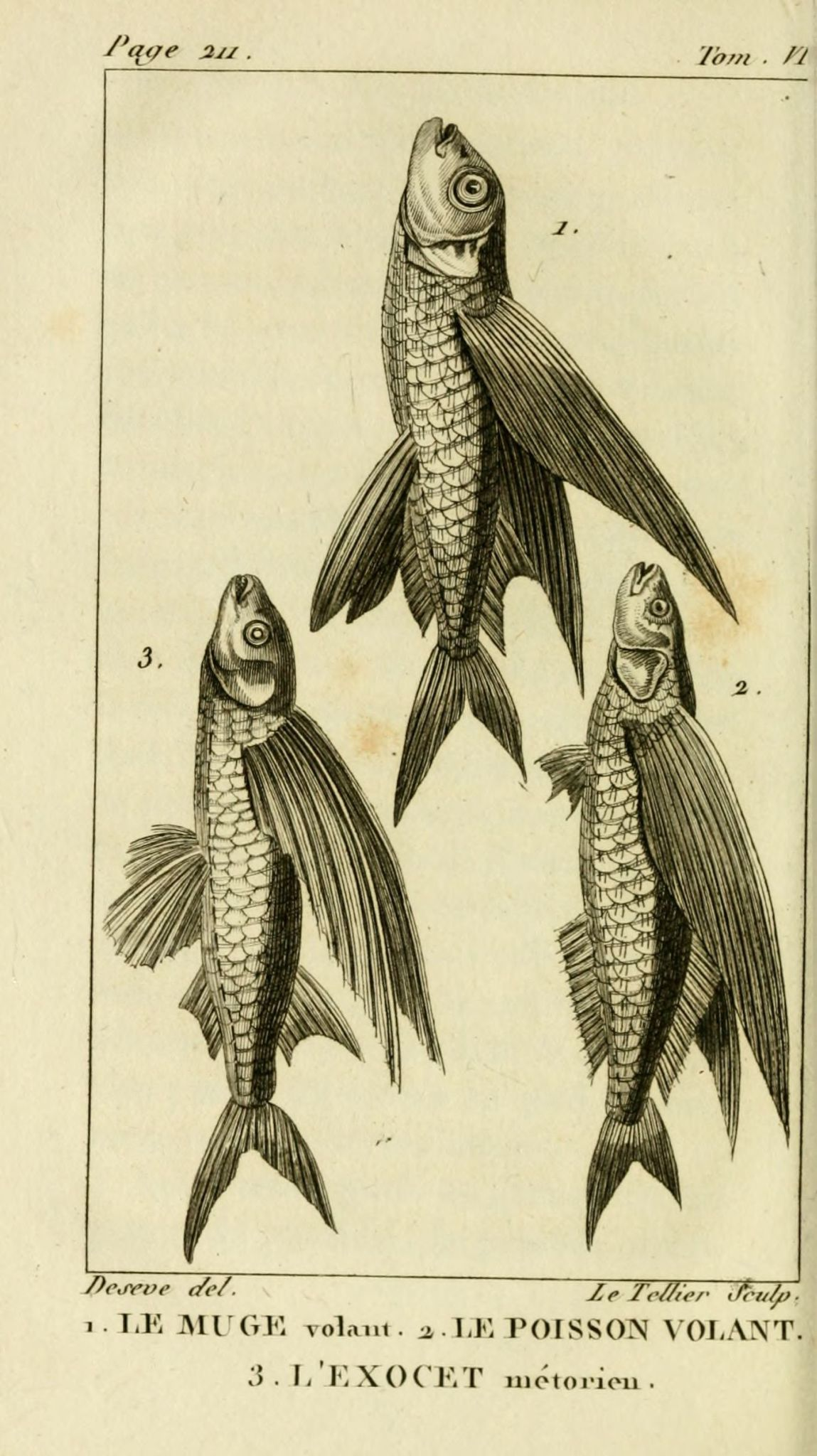 poisson volant exocet