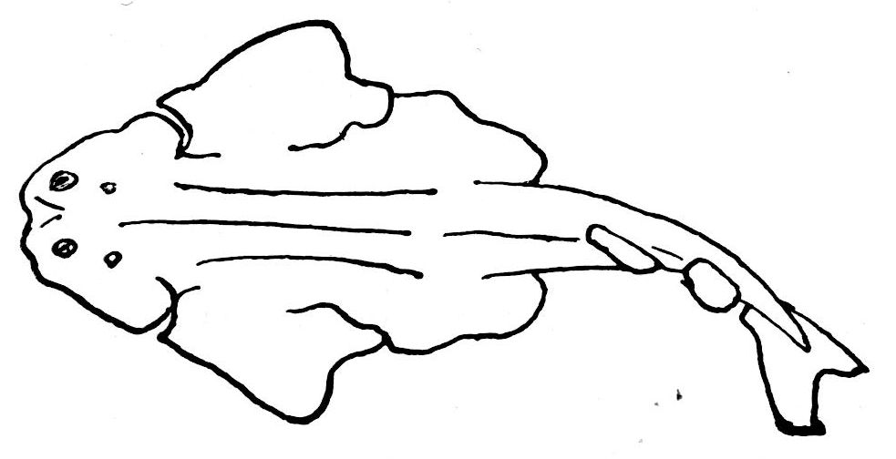 Dessin d 39 un poisson d 39 avril dessins de poissons de mer - Dessins de poissons de mer ...