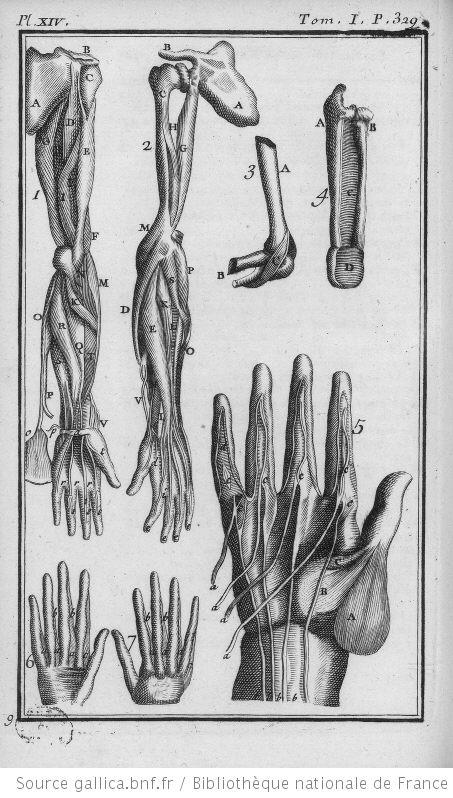 anatomie humaine anatomie humaine muscles de l avant bras du poignet et de la main gravures. Black Bedroom Furniture Sets. Home Design Ideas