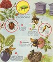 dessins_exercices_observation_CE_CM_98a_-_autres_insectes.jpg