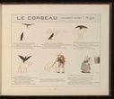 dessins_fables_de_la_fontaine_pour_enfants_-_le_corbeau_voulant_imiter_l_aigle.jpg
