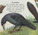 Dessins_lecons_de_choses_CM_-_oiseau-corbeau.JPG