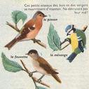 Dessins_lecons_de_choses_CM_-_oiseaux-pinson-fauvette-mesange.JPG