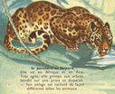 Dessins_lecons_de_choses_CM_-_panthere-leopard.JPG