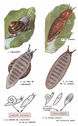 dessins_lecons_de_choses_CM1_-_escargot-limace.jpg